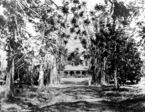 site 24 p0076 murrumba homestead 1926